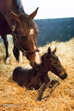 Songbird Delivers First Foal An Arrogate Filly Bloodhorse