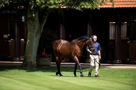 Dubawi is paraded at the Darley stallion parade at Dalham Hall Stud<br>