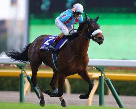 Hong Kong Stars Prep for December's Group 1 Events