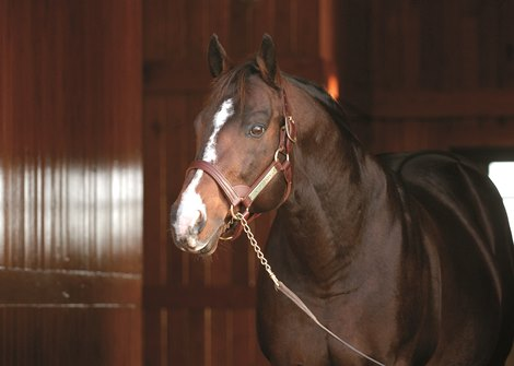 A.P. Indy at Lane's End Farm near Versailles, Ky. on Dec. 20, 2006. Leading sire of 2006.