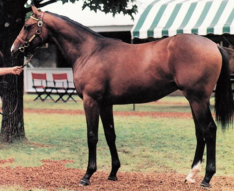 A.P. Indy - 1990 Keeneland July Yearling Sale brought $2,900,000