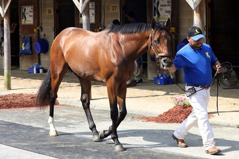 Hip 52, 2020 Fasig-Tipton Midlantic 2 Y-O-in Training Sale