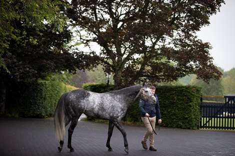 Caravaggio and Kevin Murphy.<br> Coolmore Stud.<br> Photo: Patrick McCann/Racing Post 13.06.2019</p>  <p>