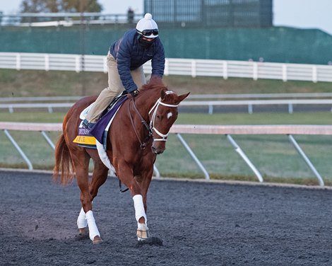 Ce Ce<br> Breeders' Cup horses at Keeneland in Lexington, Ky. on November 2, 2020.