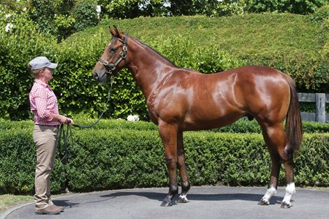 Lot 233 à 2021 New Zealand Bloodstock Karaka Yearling Sale