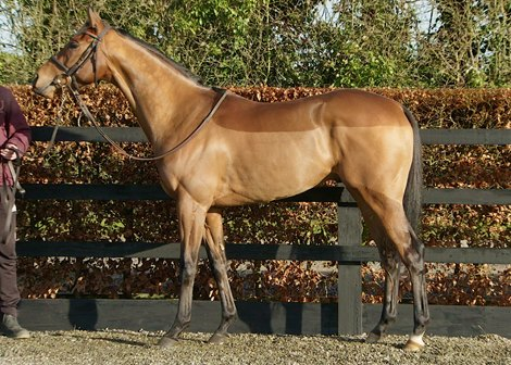 Lot 104 at 2021 Goffs February Sale
