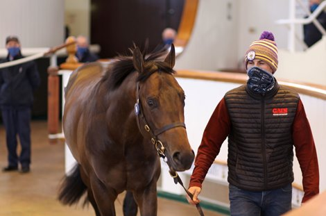 Lot 96 Aclaim (IRE) / Step Sequence (GB) B.C. (IRE)   Tally-Ho Stud, Ireland Opulence Thoroughbreds 150,000.<br> Tattersalls Craven Breeze Up Sale<br> 14/04/21