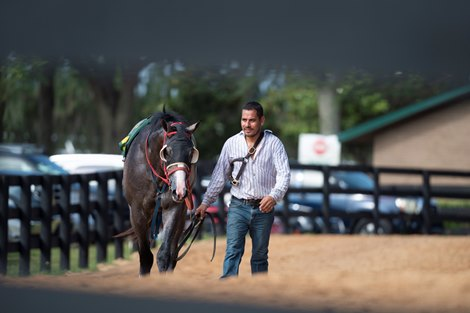 Groom comimg back from training @ OBS in Ocala FL. June 6 2021<br>  &#169;Joe DiOrio/Winning Images Photography