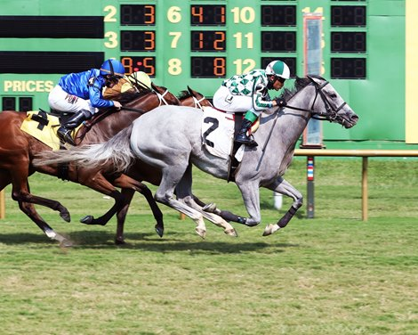 Flippant wins the KY Downs TVG Preview Dueling Grounds Oaks Saturday, August 7, 2021 at Ellis Park