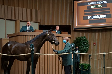 Hip 1022 colt by Street Sense out of Critical Reason at Farfellow Farms Keeneland September yearling sales on Sept. 16, 2021.