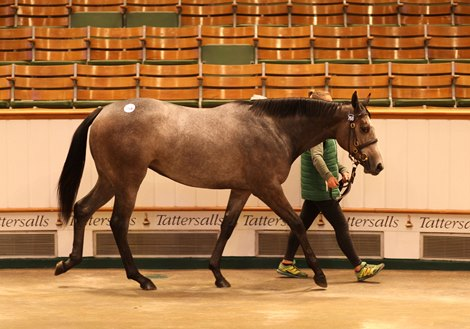 Lot 768 Galileo (IRE) / Mme Danvers (GB) B / Gr.F.  (IRE) - Manister House Stud, Ireland - BBA Ireland / Yulong Investments 320,000. - Tattersalls October Yearling Sale Book 2 - 11 October 2021
